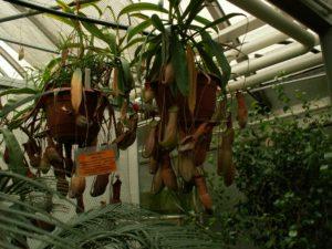 Brno – botanická zahrada