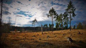 Lesní Hřbitov Hradec Králové