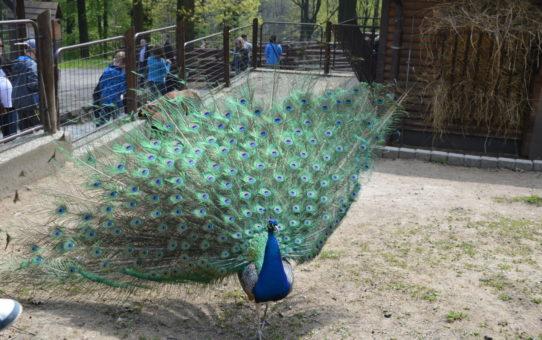 Zoologická zahrada v Ostravě